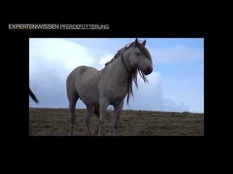 expertenwissen-pferdefütterung-16---anweiden