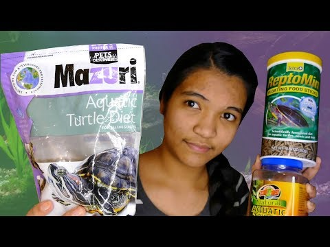 HOW TO FEED TURTLES - The Basics | Turtle 101