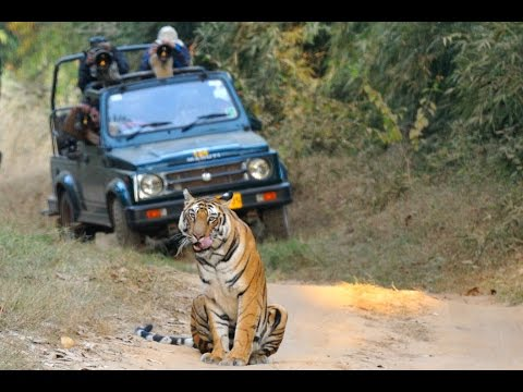 Wildlife safari experience in central India: An introduction