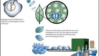 Plant biotechnology 1