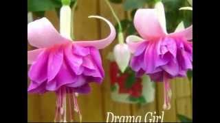 BeautyFlora. Фуксии в цвету летом 2014г. Часть 1