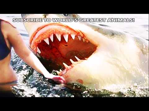 World&39;s Greatest Animals  Shark Bites Spiders Jelly Fish Attacks Must Watch