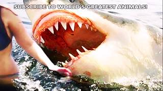 Baixar World's Greatest Animals!  Shark Bites, Spiders, Jelly Fish, Attacks, Must Watch!