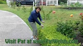 Tips For Pruning a Hedge with Pat Welsh
