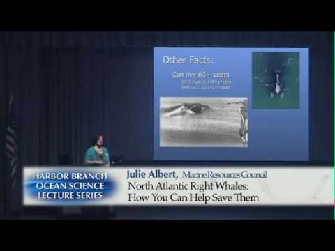 Julie ALBERT 11/19/14  North Atlantic Right Whales