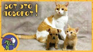 Едем на птичий рынок за друзьями для котика Рыжика. Купили щеночка и спасли котенка