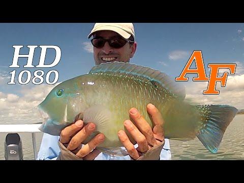 Fly Fishing Video Golden Trevally N Tusk Fish Pt1 - Andy Thomsen Sight Fishing Whitsundays EP.23
