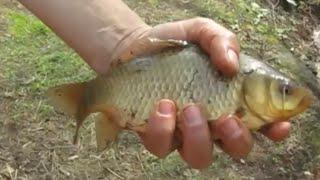 Крупный карась перезимовал и получилась отличная рыбалка(Долго я не снимал новые видео о своем пруде. Но вот пришла весна и я был приятно удивлен, вся рыба выжила...., 2016-04-15T06:36:03.000Z)