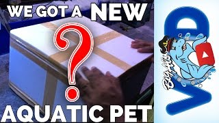 We Got a New Aquatic Pet! Name ideas, anyone? | BigAlsPets.com