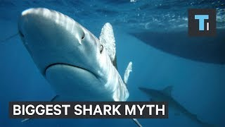 Biggest myth about sharks debunked