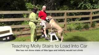 Dog Training: Great Dane Car Crate Training, Stairs, Loose-leash Walking