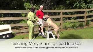 Dog Training: Great Dane Car Crate Training, Stairs, Loose-leash Walking