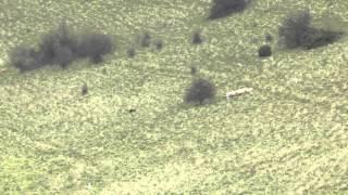 Nij Vyas Mac Hill Sheepdog Challenge Wiltshire 2012.mov Nij Vyas