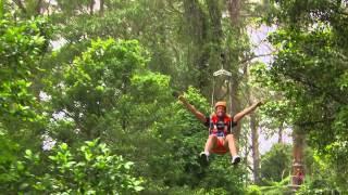 Zipline Tour at Illawarra Fly Treetop Adventures