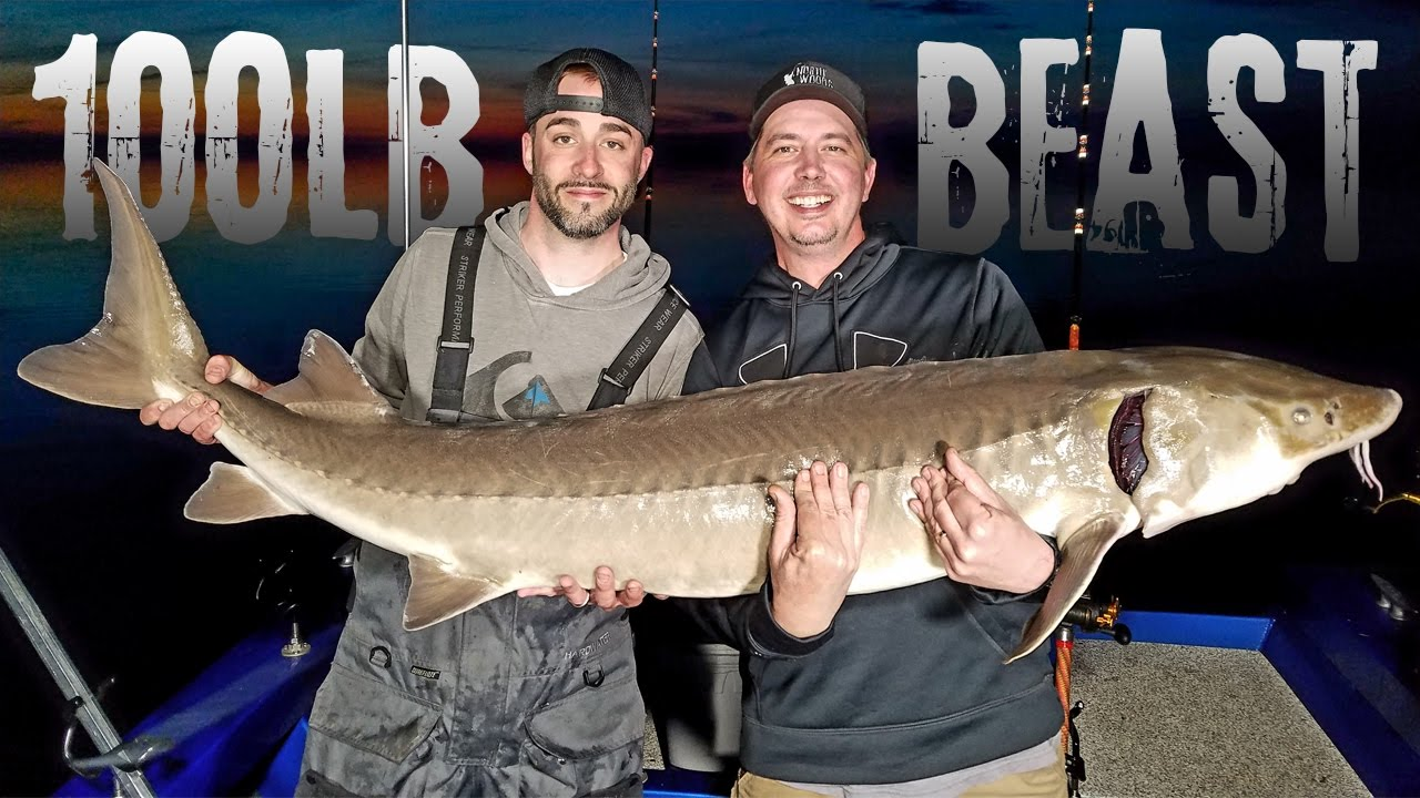 Catching a 100lb lake sturgeon on the rainy river for Rainy river fishing report 2017