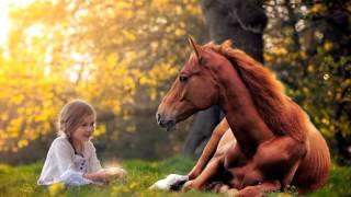Konie piękne zwierzęta 💖#11