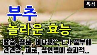 [#부추효과] 부추의 놀라운 효능 10가지 (칼슘, 철…