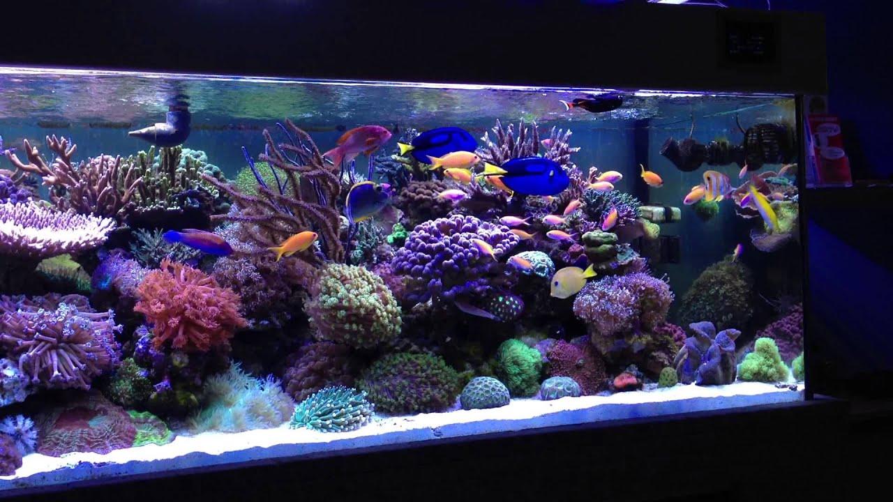 Meerwasser Aquarium 1000l   YouTube