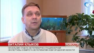 Областная ветеринарная служба получила награды на всероссийской агропромышленной выставке