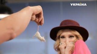 Мыши до смерти напугали Виолетту   Реальная мистика