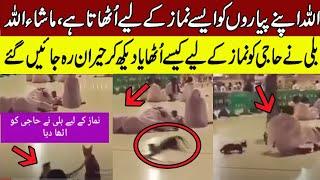 Viral Video of Cat awake Haji in Makkah for Namaz | Best islamic video 0f 2020
