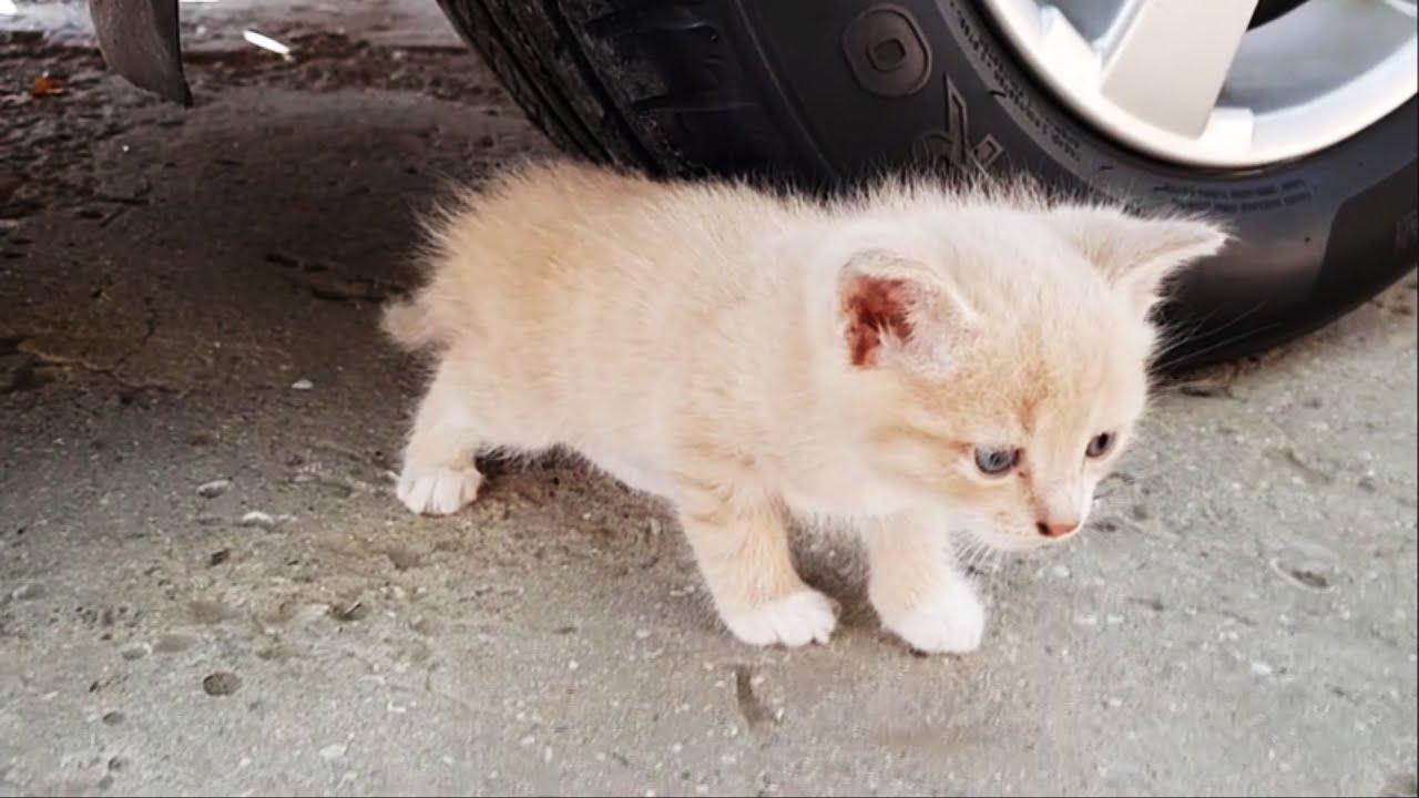 Cat vs Car - Crushing Crunchy & Soft Things by Car!