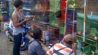 Pasar Hewan Jatinegara
