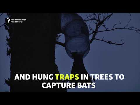 Batty In Belarus - Researching Europe's Biggest Bat