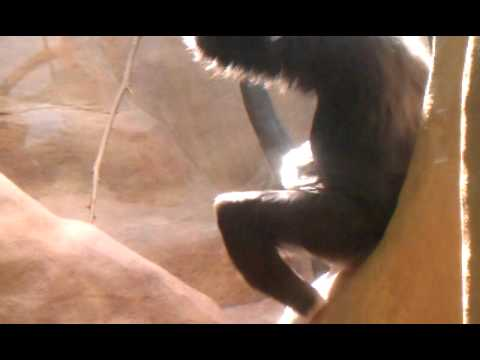 Monkey Fucks on a Car (Live)Kaynak: YouTube · Süre: 31 saniye
