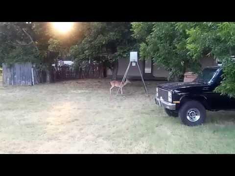Deer feeder...Central Texas...