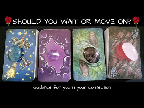 🌹-what-should-you-do-in-this-connection?-🌹-wait?-move-on?-🌹-pick-a-card-timeless-tarot-love-reading