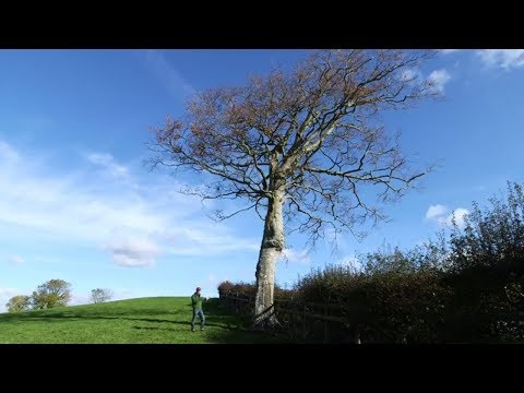 How to Choose the Best Tree for a Barn Owl Nestbox