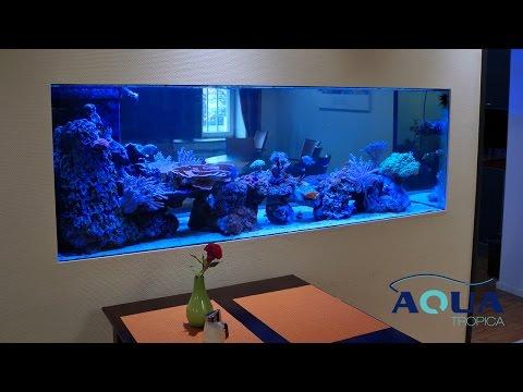 Relativ Aqua Tropica - Referenz Aquarium Raumteiler - YouTube JP05
