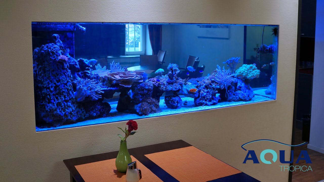 Aqua tropica referenz aquarium raumteiler youtube - Aquarium in der wand ...