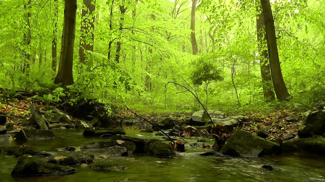60 Minutes Of Woodland Ambiance Nature Sounds Series 4