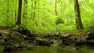 60 minutes of Woodland Ambiance (Nature Sounds Series #4) Trickling Stream & Birds Sounds thumbnail