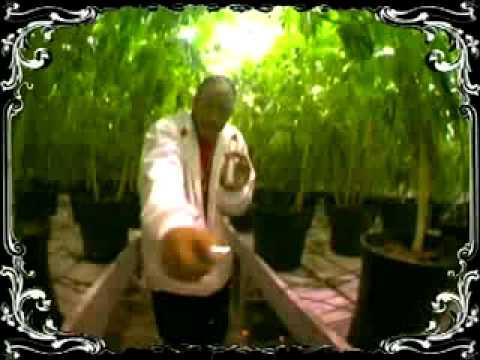 musica ludacris blueberry yum yum