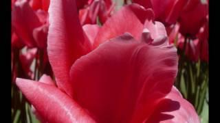 ☺☺☺ Patrick  Normand - À Jamais - Avec les paroles - MP3