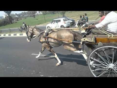 surat horse ridding