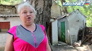 Керчь:  в Керчи раскололся столетний тополь