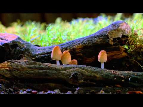 Your weekend reading: The purpose of life, an excellent mushroom timelapse