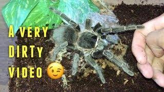 My BIGGEST SPIDER gets some dirt !!!