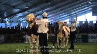 Concours National Montbéliarde 2013 : Meilleure Mamelle Espoir et Championne Espoir