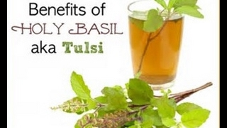 Holy Basil - Anti Aging  / Stress Fighting Wonder Herb - Queen of Herbs - Tulsi or Tulasi