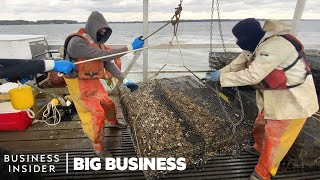 How 3.5 Million Oysters Are Harvested At This Virginia Farm Every Year | Big Business