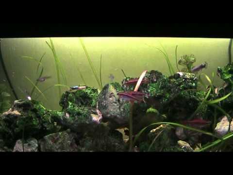 110L Aquarium