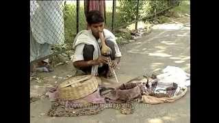 Snake charmer does his thing with a Cobra, on Delhi