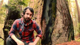Redwoods: Inspiring Life Lessons