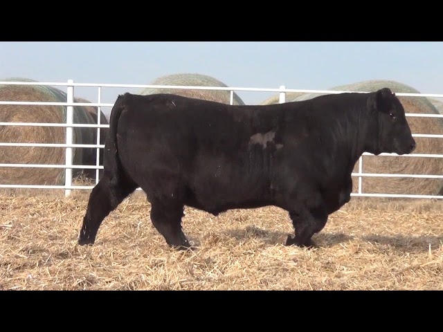 Express Ranches Lot 181