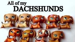 Moje Jamniki Lps ~ All Of My Lps Dachshunds